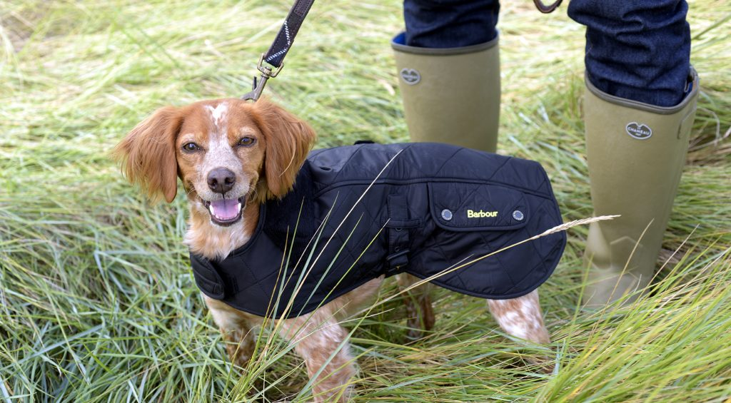 Filos in a Barbour dog coat and lead